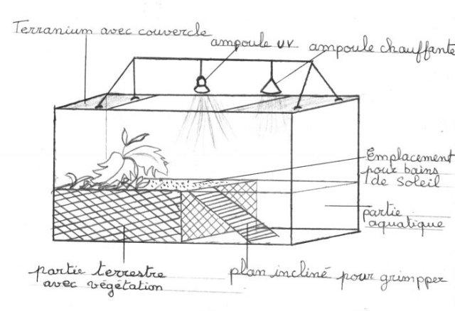 Logement tortues de floride - Bassin tortue floride strasbourg ...
